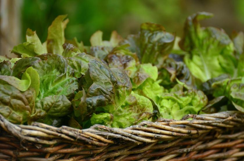 salad-1516694_1920